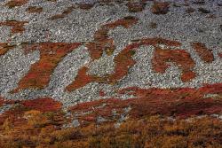 Vegetation patterns on a mountain slope, Sweden