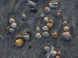 Shells on shore, Denmark