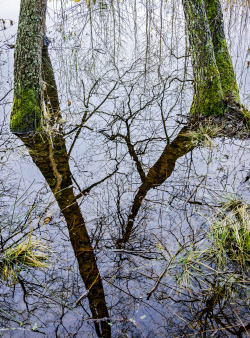 Water mirror with trees, Sweden