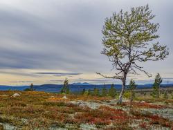 From Smolet towards Rendalssølen, Dalarna