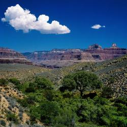Indian Garden, Grand Canyon
