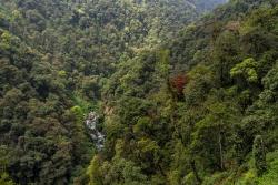 Eastern Himalayan broadleaf forest, Sikkim